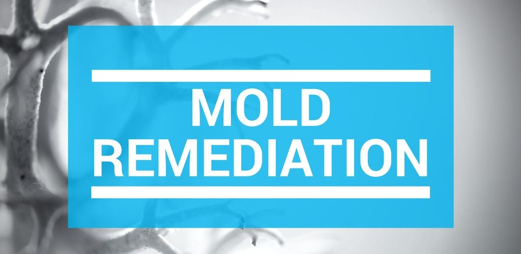 Common Misconceptions About Mold Remediation   SANAIR IAQ
