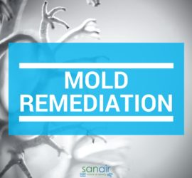 Common Misconceptions About Mold Remediation | SANAIR IAQ